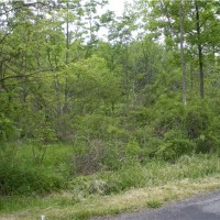 SOLD!!! 14100 Watt Rd NOVELTY Just under 5 acres* GORGEOUS LOT *Own the land or suit to build*