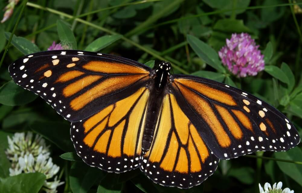 Move with Monarchs