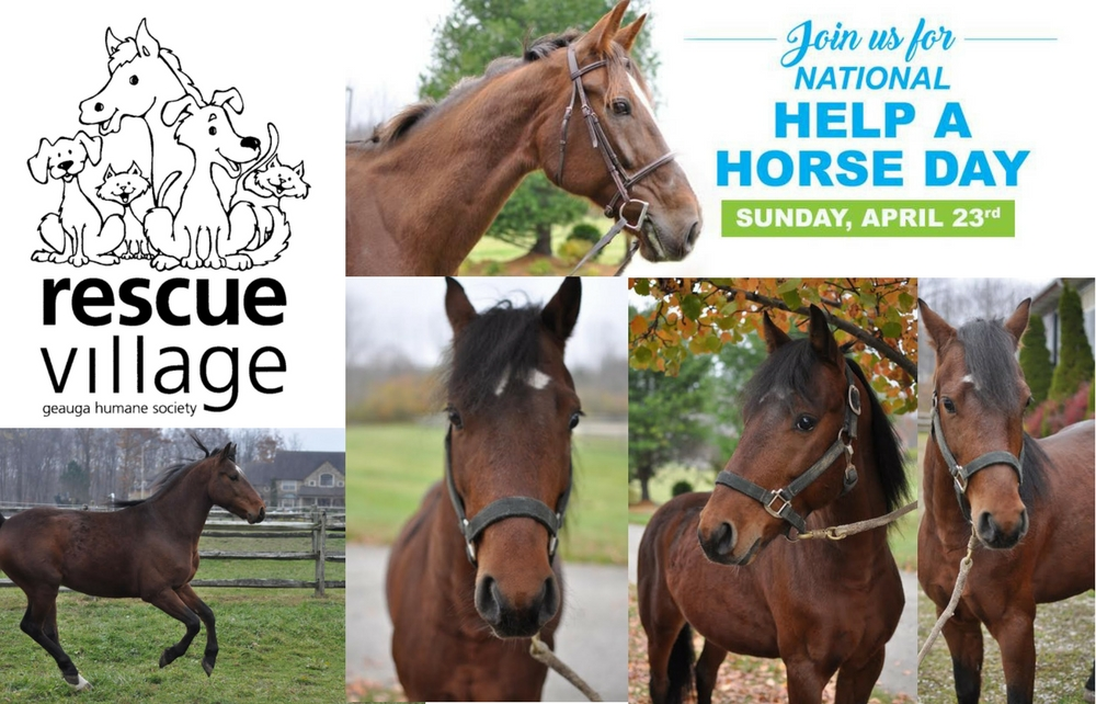 """Help Rescue Village Support Horses Like Casanova by Attending """"Help a Horse Day"""""""