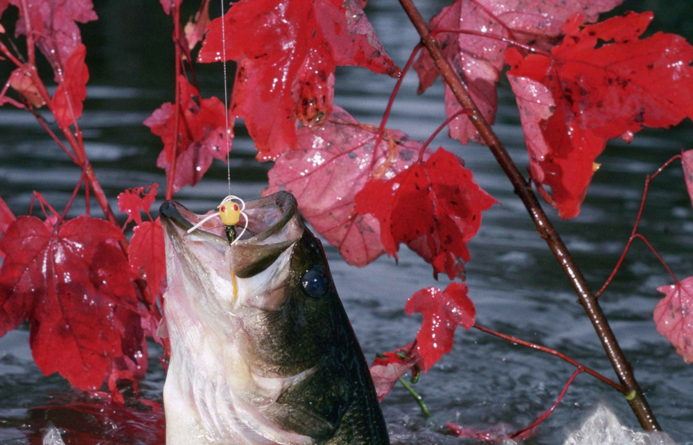 The Geauga Soil and Water Conservation District is Taking Orders for the  Annual Fall Fish Sale - Geauga News