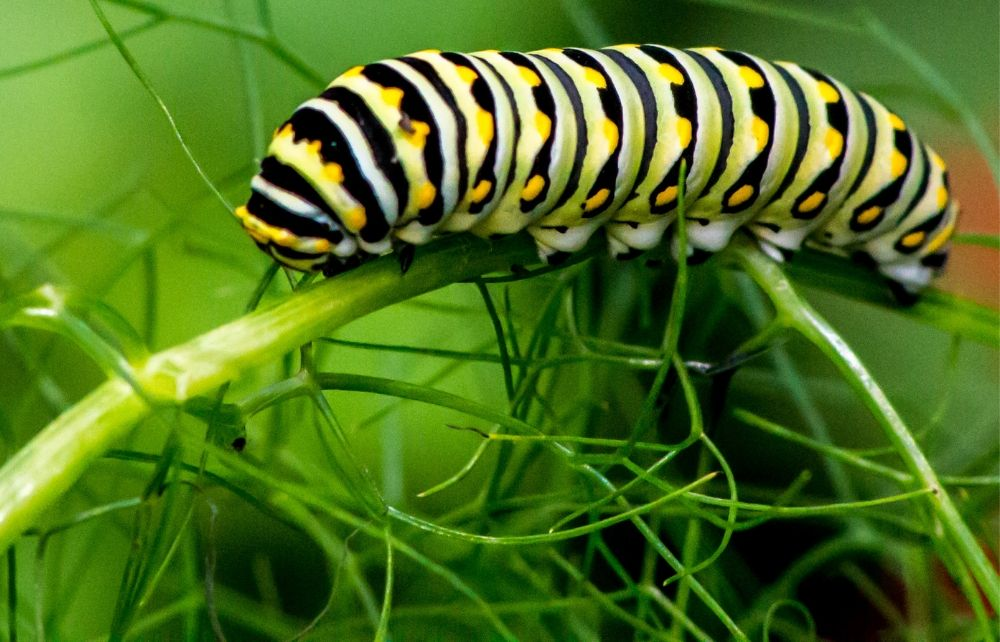 Fascinating Caterpillars  Butterflies And Meadow Insects Will Wow You At The Caterpillar