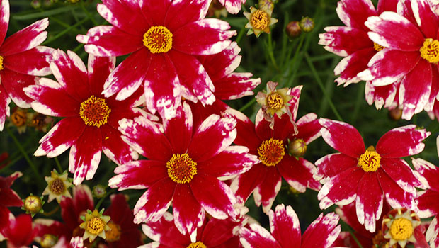 5 Best Carefree Flowers For Northeast Ohio Gardens Geauga News