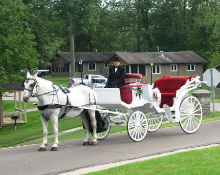 Horse & Carriage at Punderson