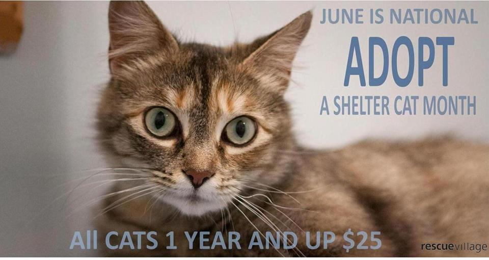 Adopt a shelter pet cat commercial