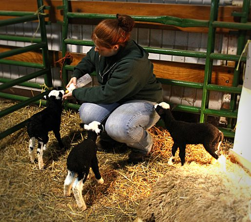 Official Lamb Count: 52 as of March 8th 2012