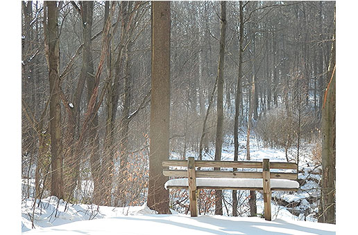 park bench in the woods.