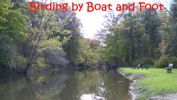 Birding by Boat and Foot