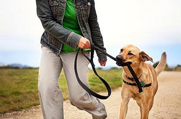 Dog owner walking dog
