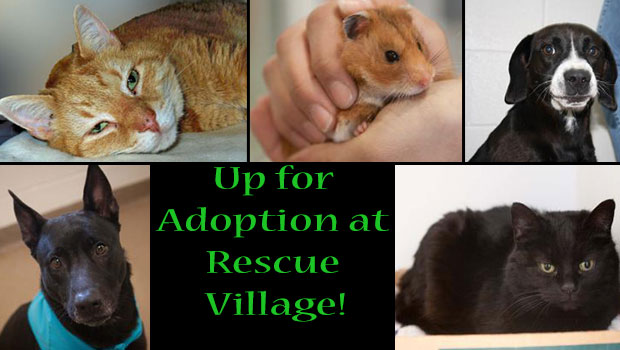 up for adoption at Rescue Village