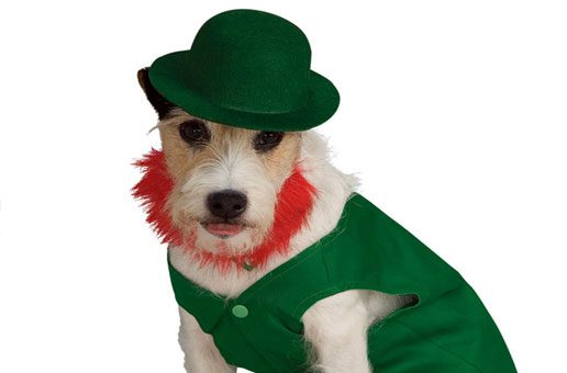 Dog dressed up for St. Patrick's Day