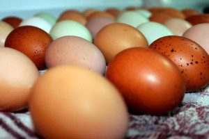 Farm fresh eggs from The Indigo Egg