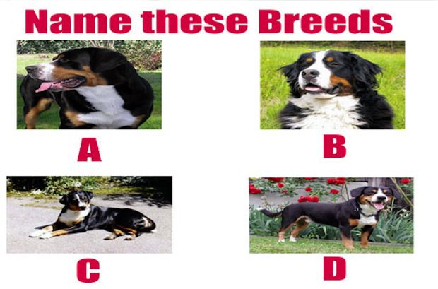 Name These Breeds