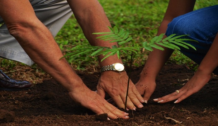 people planting trees - Geauga News