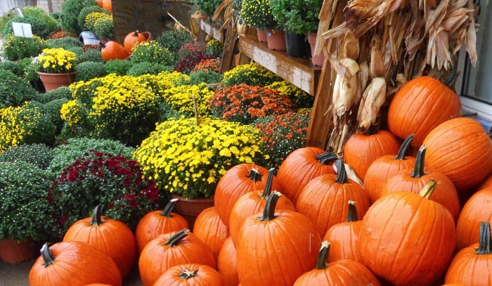 How To Keep Your Fall Mums Alive And Blooming Geauga News