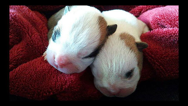 Sola and Gusto at one week old