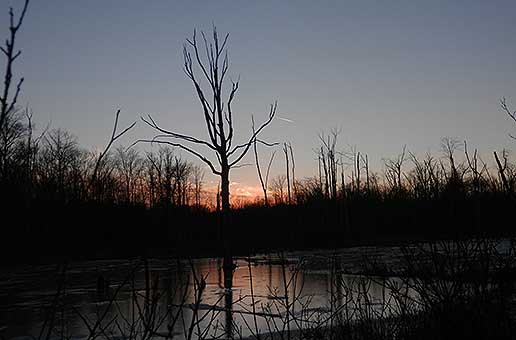 Sunset over the wetlands at the Rookery